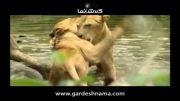 راهنمای گردشگری سنگاپور - باغ وحش و باغ های گل