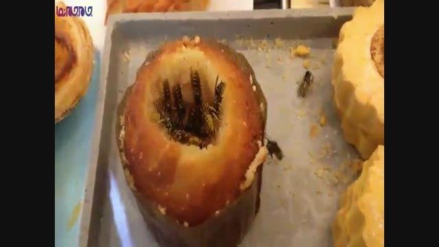 زنبورهای کیک خور فیلم کلیپ حشرات گلچین صفاسا