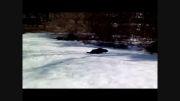 سگ برف ندیده