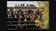 تصاویر در سوگ مرتضی پاشایی!