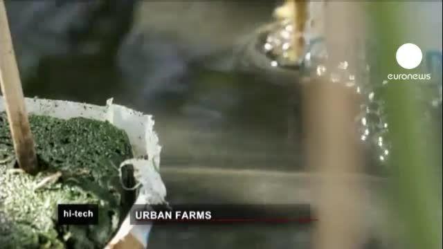 تولید گوجه فرنگی مطابق با استانداردهای پایدار شهری