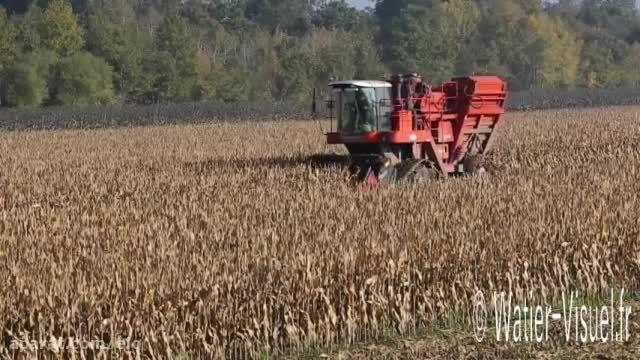 Récolte d'une production de maïs semence