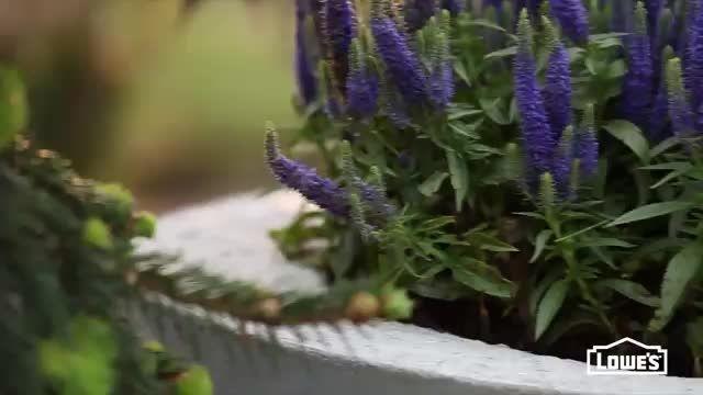 آموزش ساخت دکوراسیون بتنی برای باغ زیبای شما