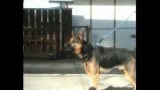 سگ نگهبان