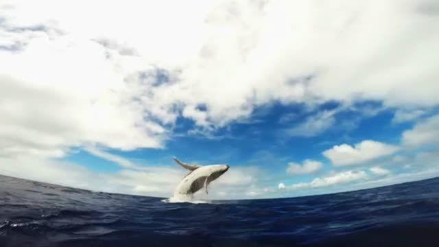 ویدئویی بسیار زیبا از بازی نهنگ و بچه اش