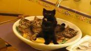 تماشاچیهای جدید(بچه گربه های بامزه)....
