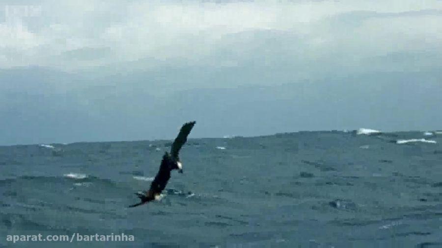 گریز ماهی های پرنده از شکارچیان هوایی و دریایی