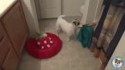 سگ خدمتکار یا سگ فوق العاده باهوش !!!!!!!!