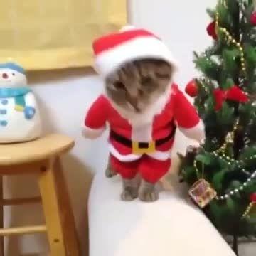 ✿  گربه با مزه  . خنده دار ✿ کلیپ طنز باحال