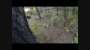 حمله خرس به دوچرخه سوار