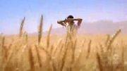 گندمزار - سمیر زند