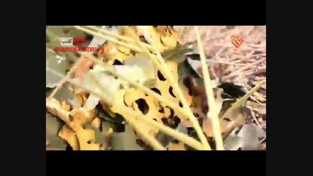 مستند تک تیرانداز/تک تیرانداز ایرانی در نبرد با داعش