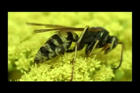 لحظه ی به دنیا آمدن زنبور