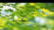 مسابقه برای برگ درخت اهل بیت بودن