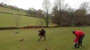 پرش بلند سگ از رودخانه