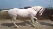 اسب رقاص  !! - چقدر جالب