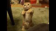 گربه کوچولو ناز