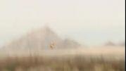 آرسی گیلان - پروازی از مدلر كوچك justin jee