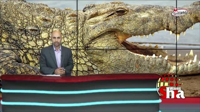 حلال شدن گوشت تمساح و مار دریایی در فتوای مفتی سعودی