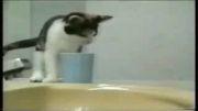 کلیپ طنز - گربه های خنده دار