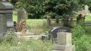 نقش صورتی بر مقطع بریده تنه یك درخت بر روی یك قبر