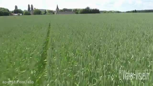 Église de Chartrené en Anjou bordée de culture de blé