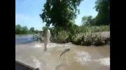 این همه ماهی تو رودخونه چیکار میکنه!!!!؟