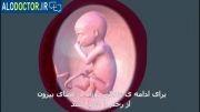 مشاهده ی مراحل رشد جنین(قسمت چهارم)