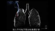 اثر دود سیگار بر شش ها