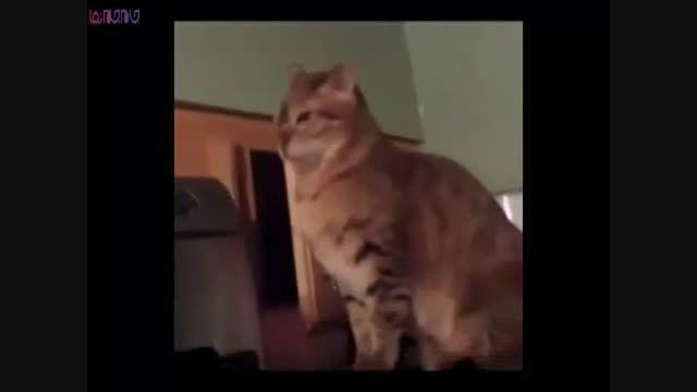 وقتی گربه ها همدیگر را غافلگیر می کنند+فیلم ویدئو کلیپ