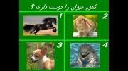 نظرسنجی::کدوم حیوون رو دوس داری؟؟؟