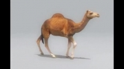 Reference برای متحرک سازی( camel 3D)