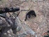 حمله ی بی نتیجه ی خرس(بازم خرس ترسو میشود)