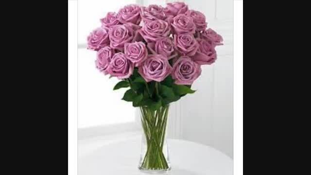 گل های رز