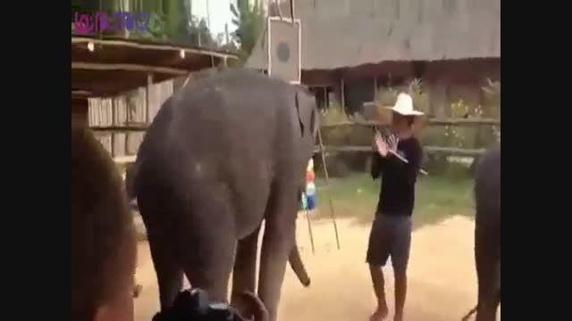 رقص فیل بامزه جالب خنده طنز+فیلم کلیپ گلچین صفاسا