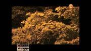نماهنگ پاییز تو راهه با صدای شهاب اکبری