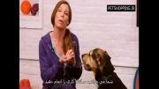آموزش سگ های کوچک با زیرنویس فارسی