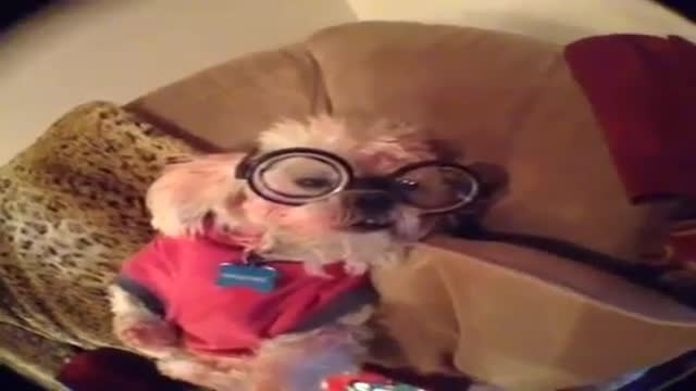 سگ عینکی !!!