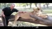 مهران مدیری در قفس شیرها