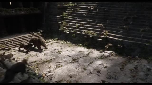 تیزر فیلم کتاب جنگل - پورتال امروز آنلاین