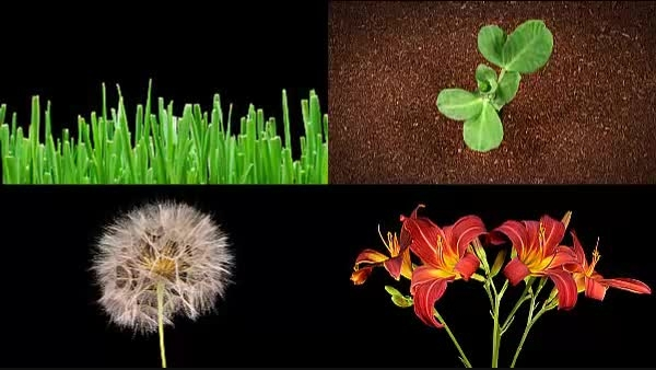 فوتیج گیاه هان - Artbeats - Grow 2 HD