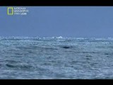 مستند شکارچیان - نهنگ قاتل (اورکا)-National Geographic I Predator Orca