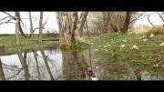 طبیعت  روستای ورچه