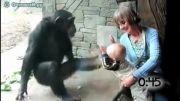 سلام یه ویدیو جالب از دست ندید-واکنش حیوانات
