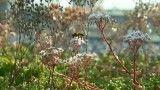 عامل نابودی زنبورهای عسل چیست؟