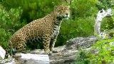 زیبا ترین کلیپ گربه سانان