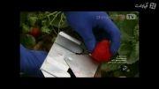 خط تولید بسته بندی میوه های منجمد