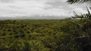 اورانگوتان سوماترایی