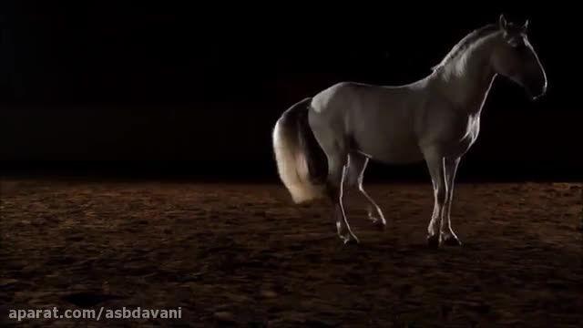 ویدئو اول کانال اسبدوانی - فیلم کلیپ ویدئو مسابقات کورس
