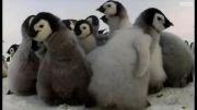 پنگوئن جاسوس